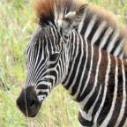 Hluhluwe Game Reserve, South Africa