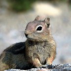 The smallest creatures in Rocky Mountain National Park